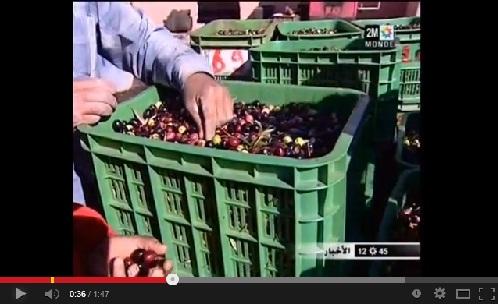 تراجع نسبة محصول الزيتون بـ40 في المئة هذا العام