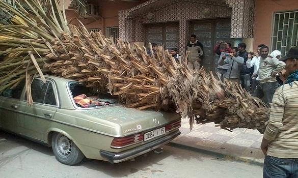 بسبب «رياح عاصفية» نخلة تسقط على سيارة مخلفة أضرارا بها في أرفود