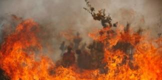 96 حريقا يجتاح 145 هكتارا من الغابات