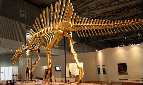 إكوم تستنكر بيع هيكل ديناصور مغربي