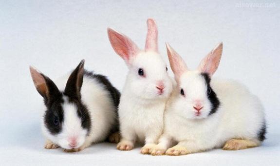 ثلاث فوائد على ذكر «الأرنبات».. لكي لا يخلوَ عبثنا من فائدة..