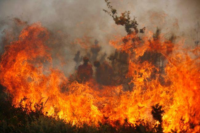 ائتلاف بيئي يقدر حصيلة حرائق واحات طاطا