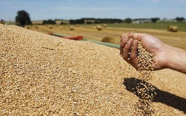 الحكومة تتخذ التدابير اللازمة لضمان ظروف تسويق جيدة لمحاصيل الحبوب
