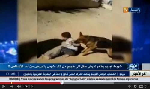 فيديو تعرض طفل صغير لهجوم شرس من كلب بعد تحريض مجموعة شبان