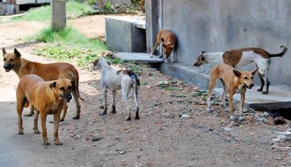 إعدام 30 كلبا بالرصاص في إقليم وازان
