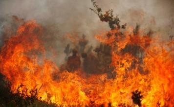 الحرائق تفتك بالواحات
