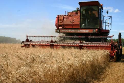 باحثان من غزة يصنعان منتجا بديلا للقمح