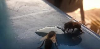 سبحان الله: النحل يشرب مشروبا غازيا بالحركة البطيئة