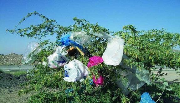 حرب متواصلة: مشروع قانون يمنع تصنيع واستيراد وبيع أكياس البلاستيك