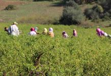 إسبانيا.. أزيد من عشرة آلاف عقد عمل لعمال مغاربة موسميين
