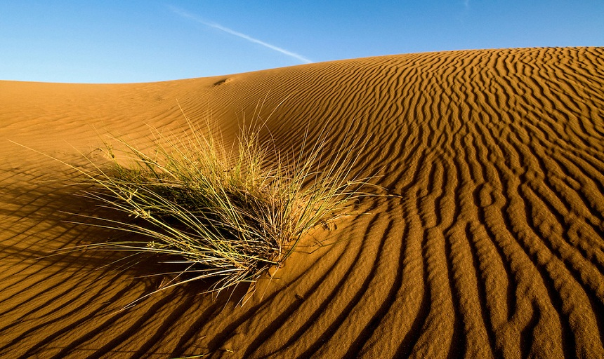 موت 44 مهاجر عطشا في صحراء النيجر