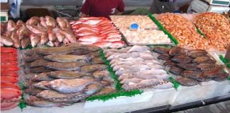 تراجع كميات الأسماك المعروضة بالأسواق المغربية