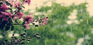 أمطار قوية اليوم الخميس بعدد من مناطق المملكة وخفيفة في مناطق أخرى