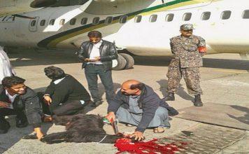الخطوط الجوية الباكستانية تذبح معزة قربانا قبيل إقلاع إحدى طائراتها