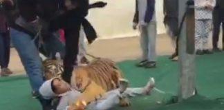 بالفيديو.. نمر ينقضّ على طفلة في السعودية
