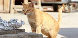 """سليمة القضاوي: مغربية تهدي الحيوانات الضالة """"محمية"""" طبيعية"""