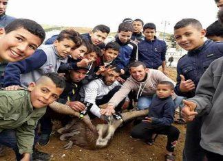"""التحقيق مع شباب قاصرين بالفنيدق حول حادث احتجاز """"نسر أكلف"""" وتعذيبه"""
