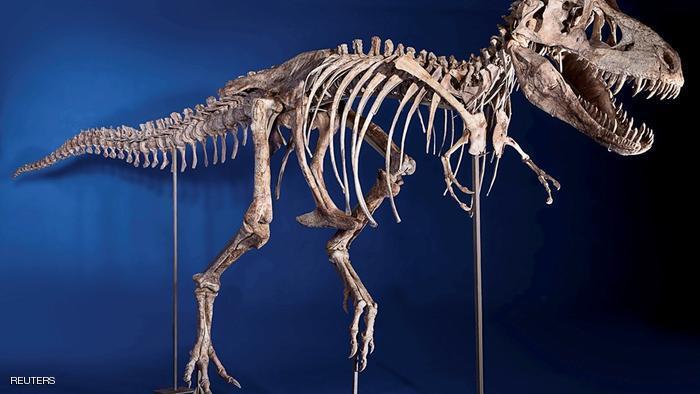 المغرب مطالب بأداء أموال باهظة لاستعادة هيكل ديناصور نادر