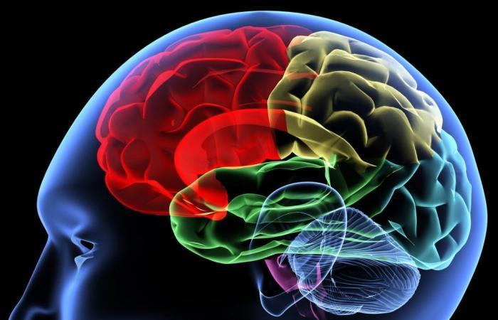 حذاري.. 5 أطعمة تؤذي الدماغ