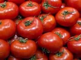 حظر روسي على تركيا يضاعف صادرات الطماطم المغربية ثلاث مرات