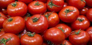 وزارة الفلاحة: الطماطم تعتلي الصادرات المغربية من الخضروات