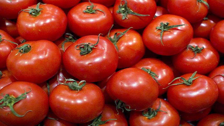 الطماطم المغربية تمثل 71 بالمائة من واردات الاتحاد الأوروبي خارج القارة