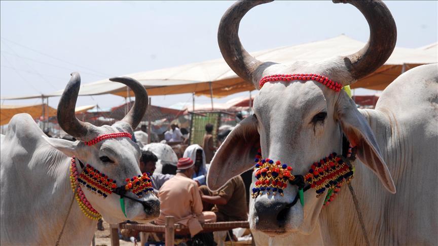 مسلمو الهند يخشون جماعات حماية الأبقار في عيد الأضحى (تقرير)
