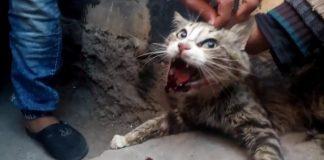 الأمن يعتقل مشعوذة تخيط أفواه القطط بمكناس بعد نصب كمين للإطاحة بها