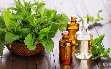 قطاع النباتات الطبية والعطرية بالمغرب يوفر حوالي 500 ألف يوم عمل سنويا
