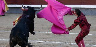 مظاهرات في إسبانيا لحظر مصارعة الثيران