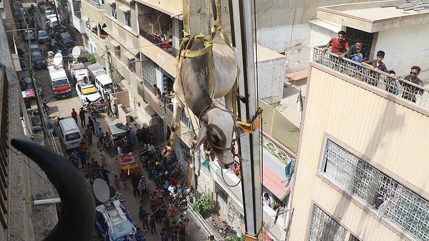 بالصور.. باكستاني يستعين برافعة لإنزال الأضاحي من سطح منزله