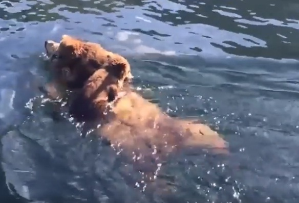 فيديو.. الأم تحمل صغارها فوق ظهرها لتعبر بهما إلى بر الأمان