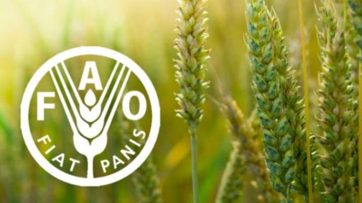 """""""فاو"""": تراجع طفيف في أسعار الأغذية العالمية خلال يونيو"""