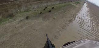فيديو.. شاهد قتل الخنازير البرية في أستراليا بعد تزايد أعدادها وتخريبها للمزارع