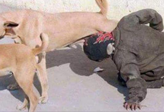 وزارة الداخلية: هذه حقيقة صورة المتشرد الذي يرضع ثدي كلبة ضالة