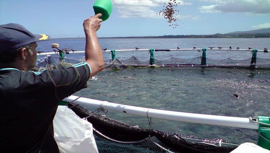 إنتاج أزيد من 22 مليون من صغار الأسماك بمحطات الاستزراع المائيتربية الأحياء المائية بالمغرب.. إنتاج 510 أطنان في سنة 2016