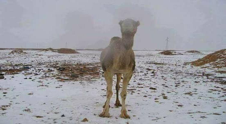 للمرة الثالثة في 40 عاما.. سقوط ثلوج على الصحراء الكبرى (صور)