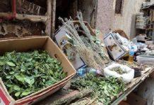 الحبس لكل من يتاجر في الأعشاب الطبية دون رخصة