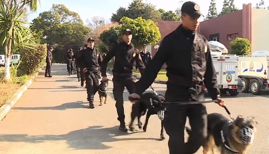 فيديو.. تداريب خاصة بالمركز الوطني لترويض كلاب الشرطة