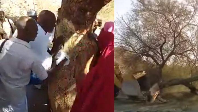 بالفيديو.. معتمرون يتبركون بشجرة، وأمير مكة المكرمة يأمر بإزالة الشجر والحجر الذي يتبرك به