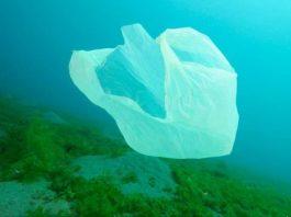 البلاستيك خطر دائم على الكائنات البحرية