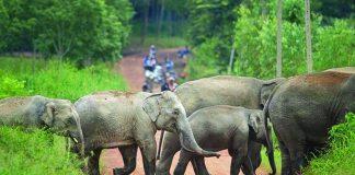 فيل يقتل شخصًا ويصيب آخر بجروح في الصين
