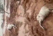 فيديو مؤلم.. عاصفة رعدية تخلف خسائر جسيمة وتقتل الماشية بإقليم قلعة السراغنة