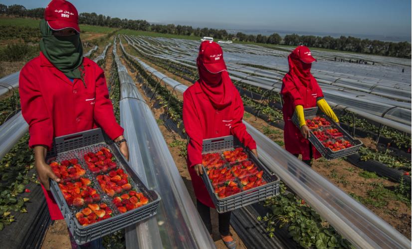 وزارة الشغل: إسبانيا ترغب في تشغيل أزيد من 16 ألف عاملة مغربية بحقول الفراولة والفواكه الحمراء