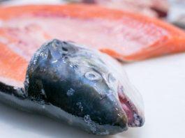 الأسماك الدهنية تكافح سرطان العظام (دراسة)
