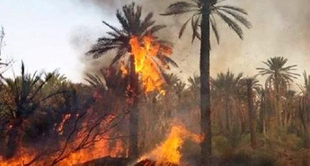 إقليم الرشيدية.. حريق بواحة زيز بأوفوس يأتي على أزيد من 2540 نخلة