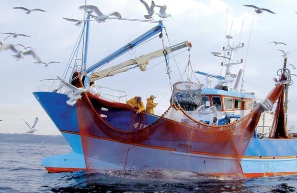 مجلس الحكومة يصادق على مشروع مرسوم يتعلق بتحديد شروط منح وتجديد رخص الصيد البحري