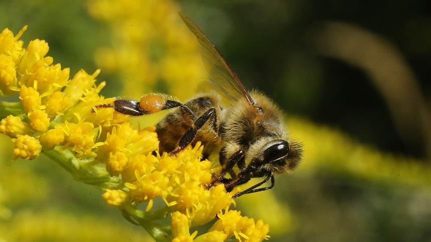 النحل يبهر العلماء.. قادر على تعلّم الرياضيات المجردة