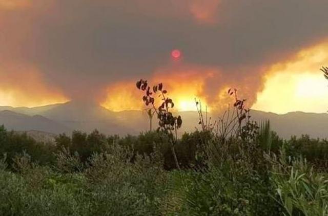 فيديو.. حريق غابة تفرسيت إقليم الدريوش