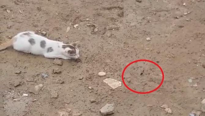 فيديو.. شاهد كيف أرادت هذه القطة الانقضاض على فريستها الغريبة!!!